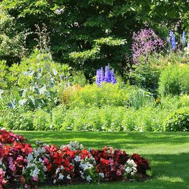 flowers and garden landscaping