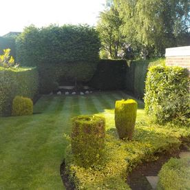garden and hedges